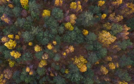 Drevo je najčastejšie sa použitelný stavebný materiál na svete a spolu so zodpovedným lesným hospodárstvom je jediným obnoviteľným stavebným materiálom čo máme. To isté sa nedá povedať o tropickom dreve.